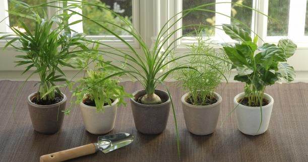 Low maintenance indoor plants laurel green blog for Low maintenance indoor trees